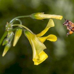 World Bee Day - May 20